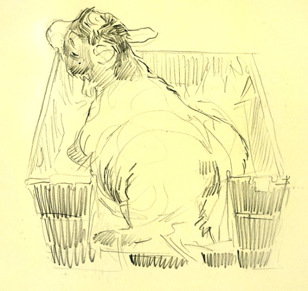 goat in a bucket_2013