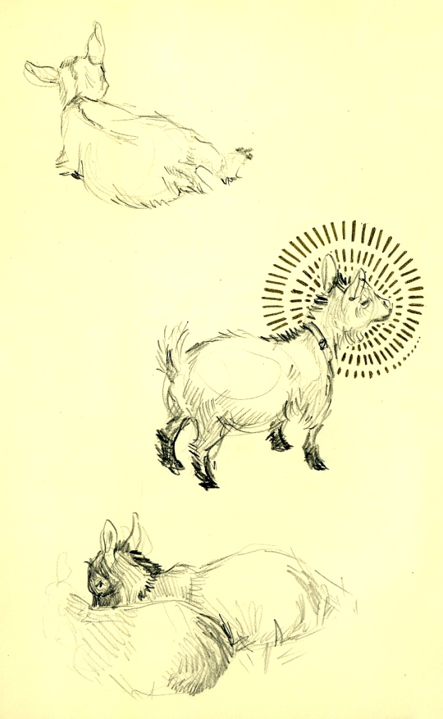 goats_2013001